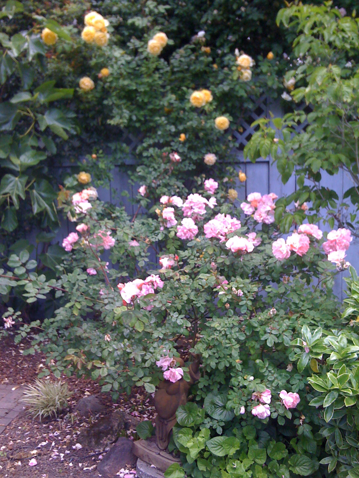 Roses, Dogwood, and Fig tree.