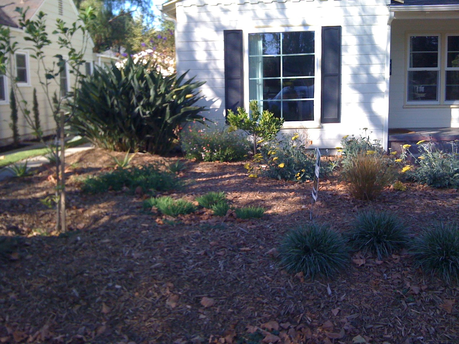Water Wise Landscaping provided a drip irrigation retrofit for this Oakland garden renovation.