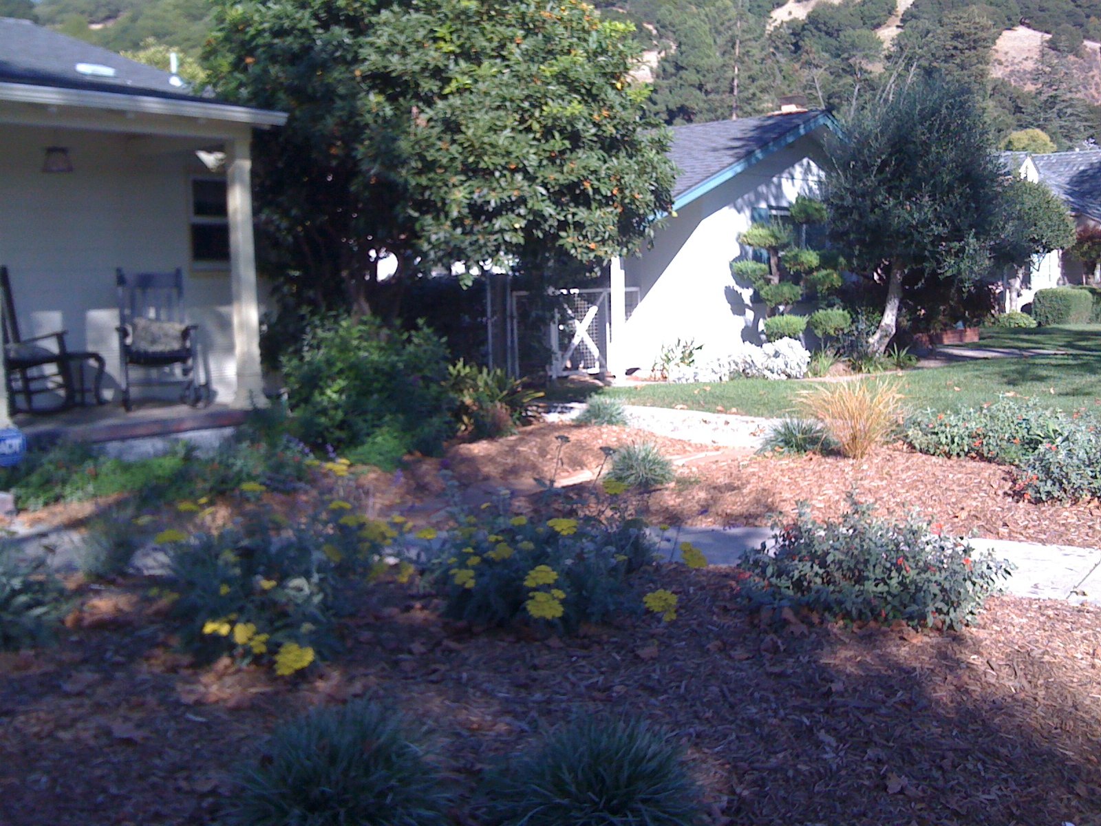 Drip irrigation, which is mulched over in this picture, greatly increases this garden's water efficiency.