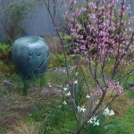 Redbud trees are most interesting in the early spring bloom