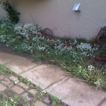 Before, Side Garden