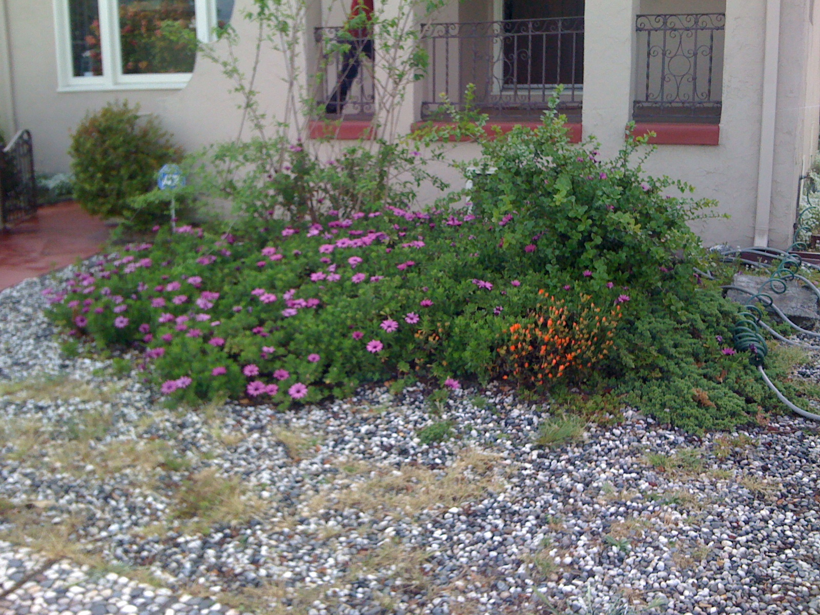 Before, Front Yard