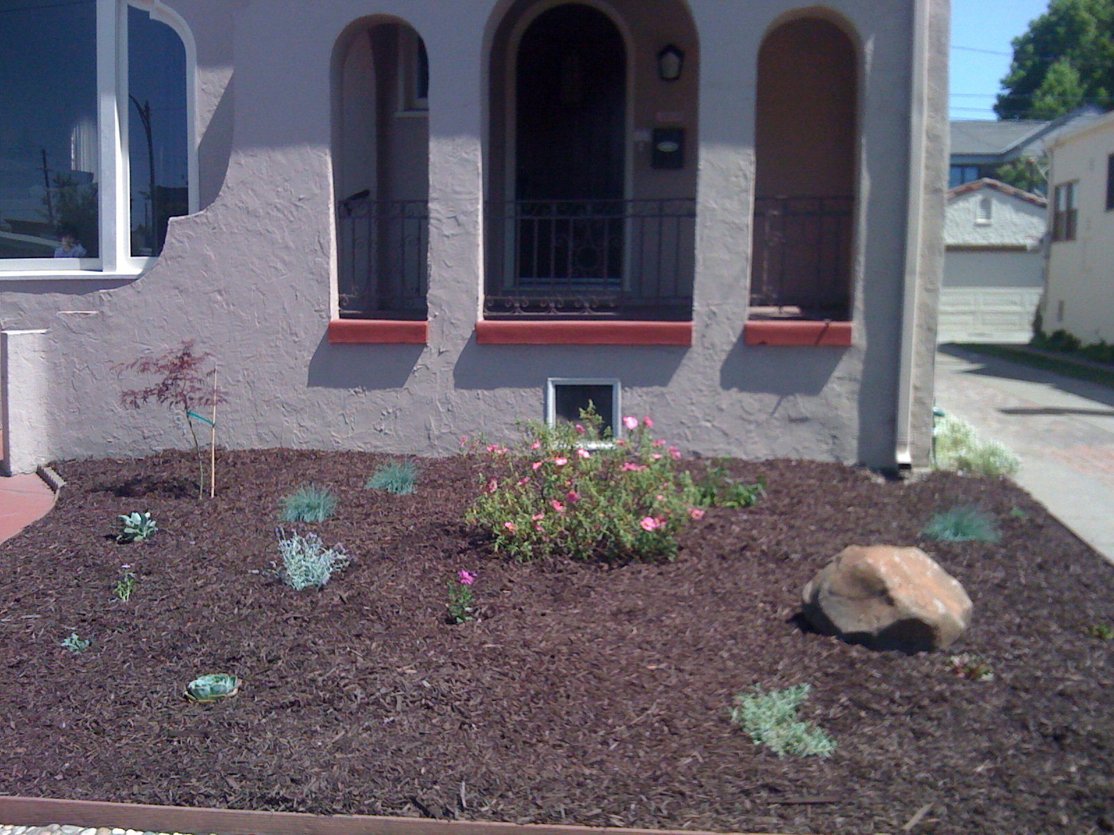 Front Yard, after total garden renovation.