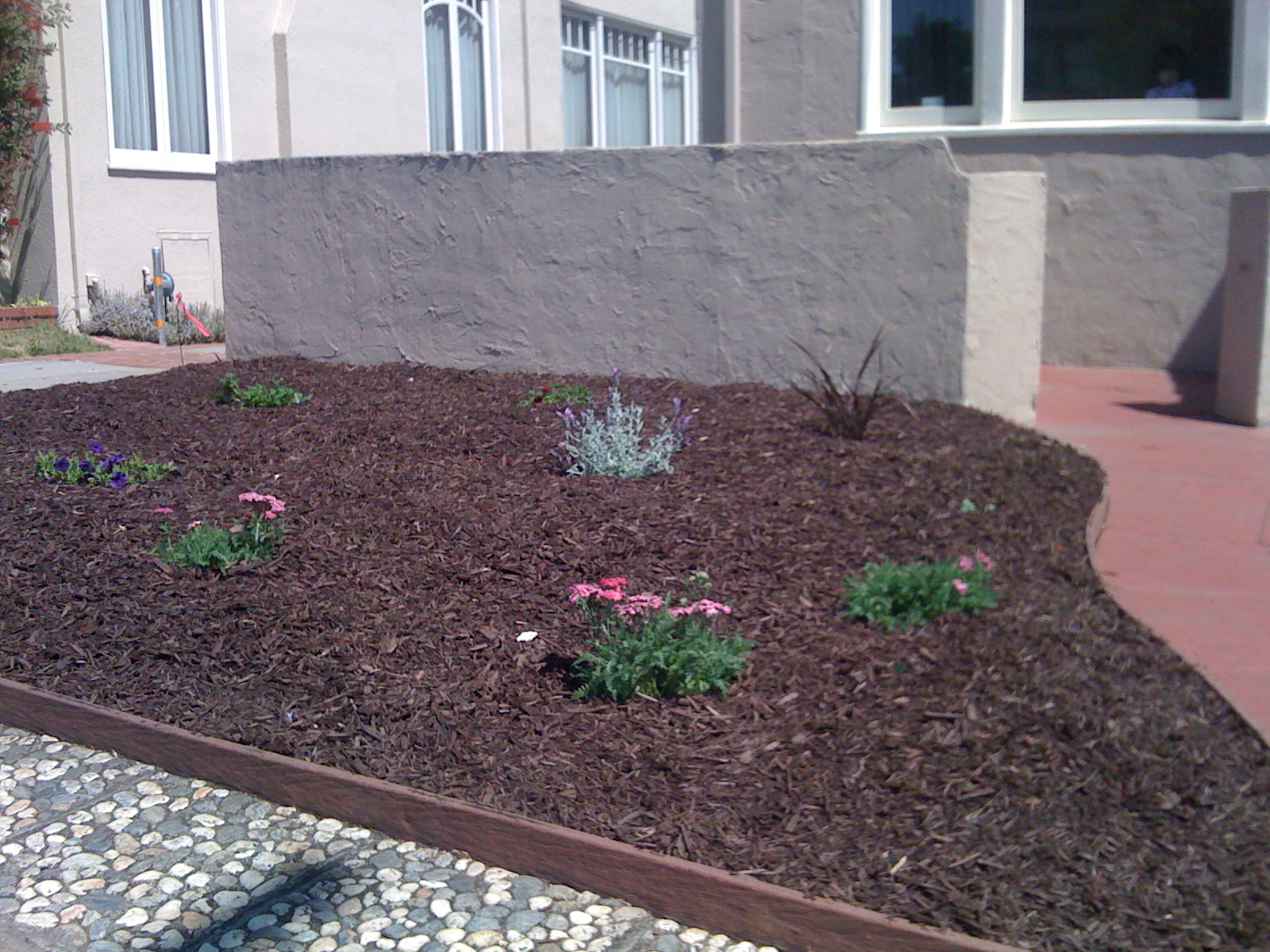 Water Wise Landscaping provided plans and installation for this total renovation in Alameda, CA.
