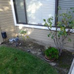 Window garden, before garden renovation by Water Wise Landscaping