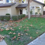 Front yard lawn and shrubs, before